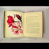A beautifully Illustrated Floral book in bright and aluring color
